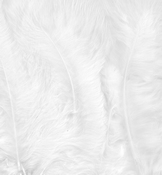 Marabou Feathers,White,15pcs