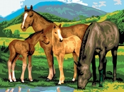 Painting by Numbers Horses and Foals | A3 formaat