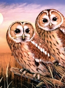 Painting by Numbers Junior Tawny Owls | A4 formaat